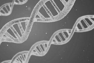 gynecomastia-blog-genetics-the-private-clinic